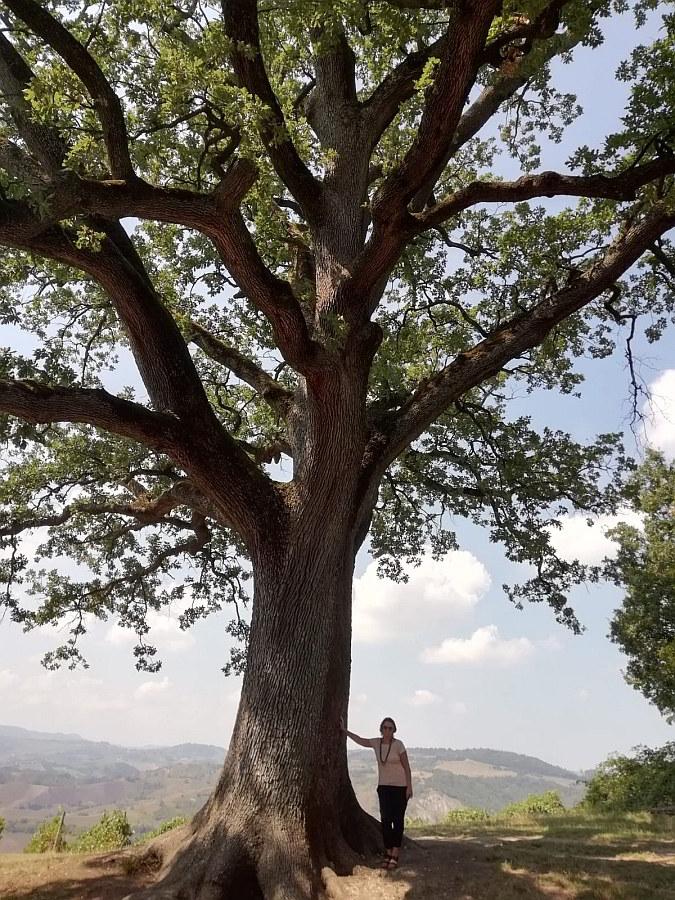 La grande quercia dai cento rami