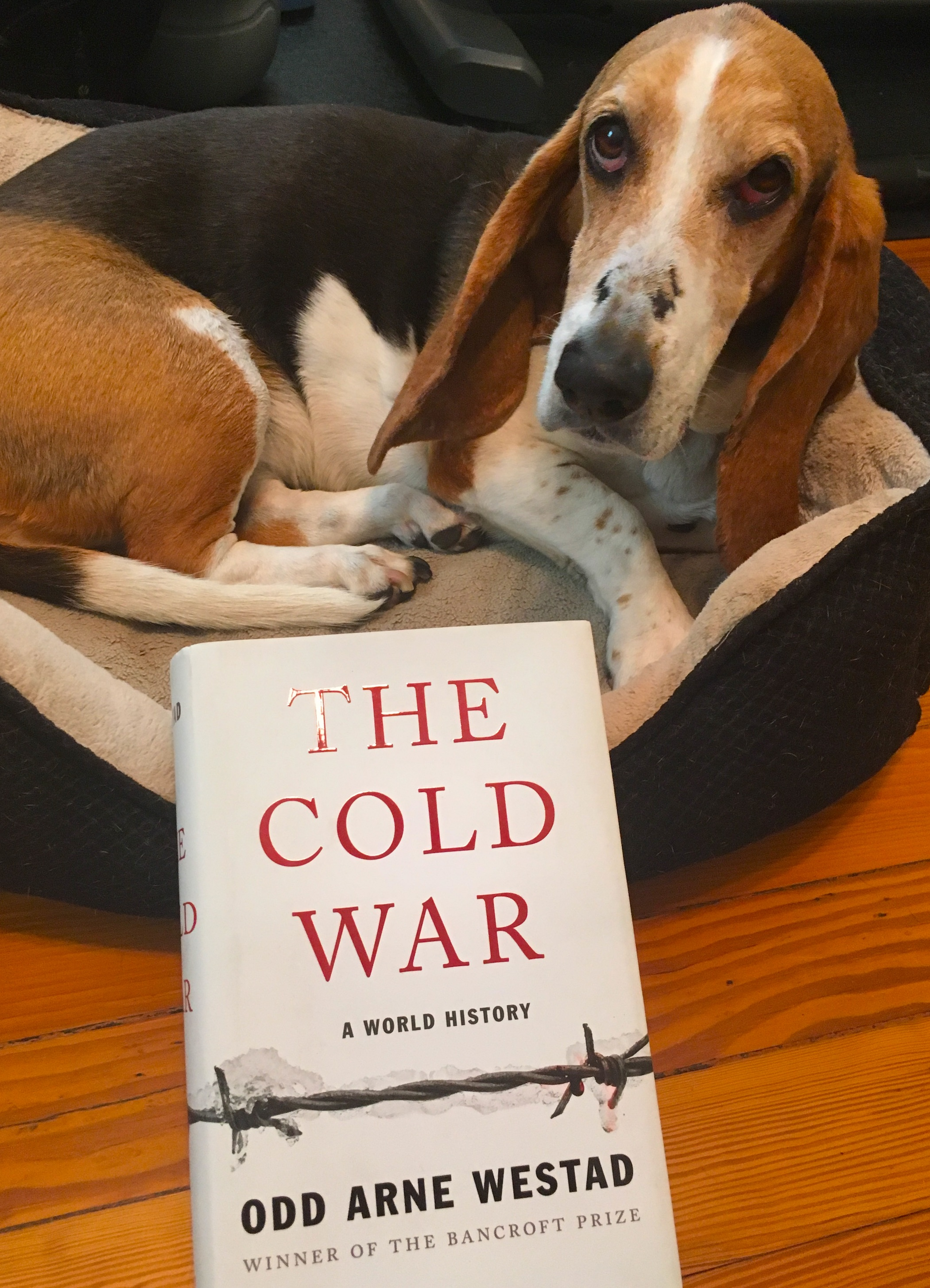 A perfect book for Bassett hounds and history buffs.