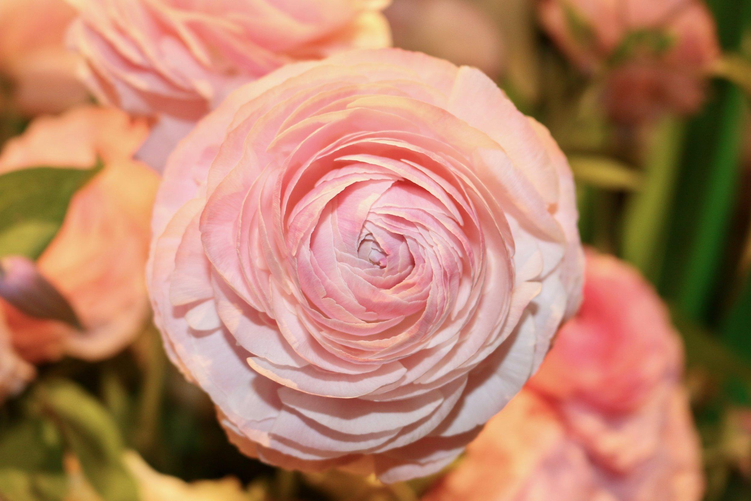 Ghodsee Flower Power 20.jpg