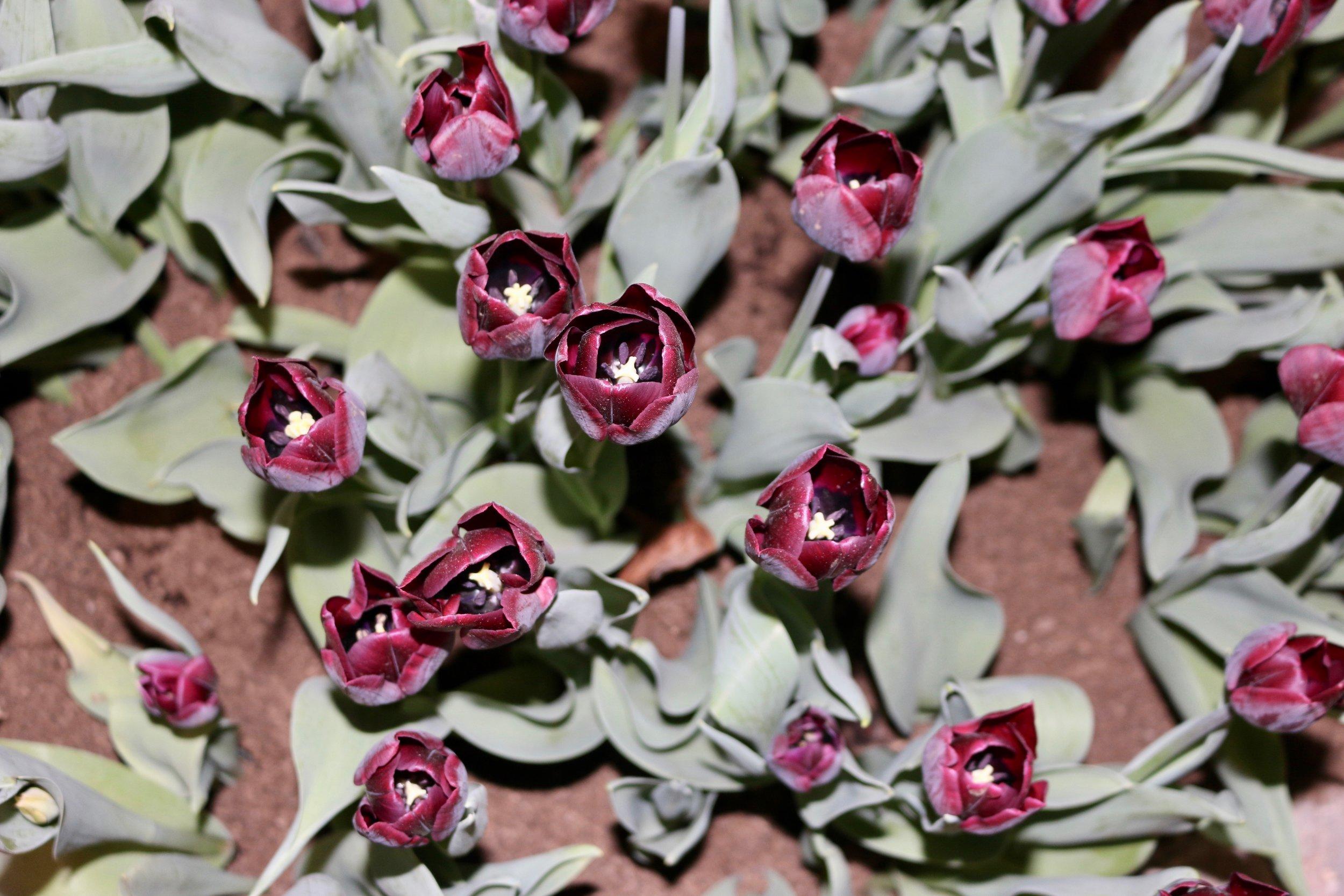 Ghodsee Flower Power 9.jpg