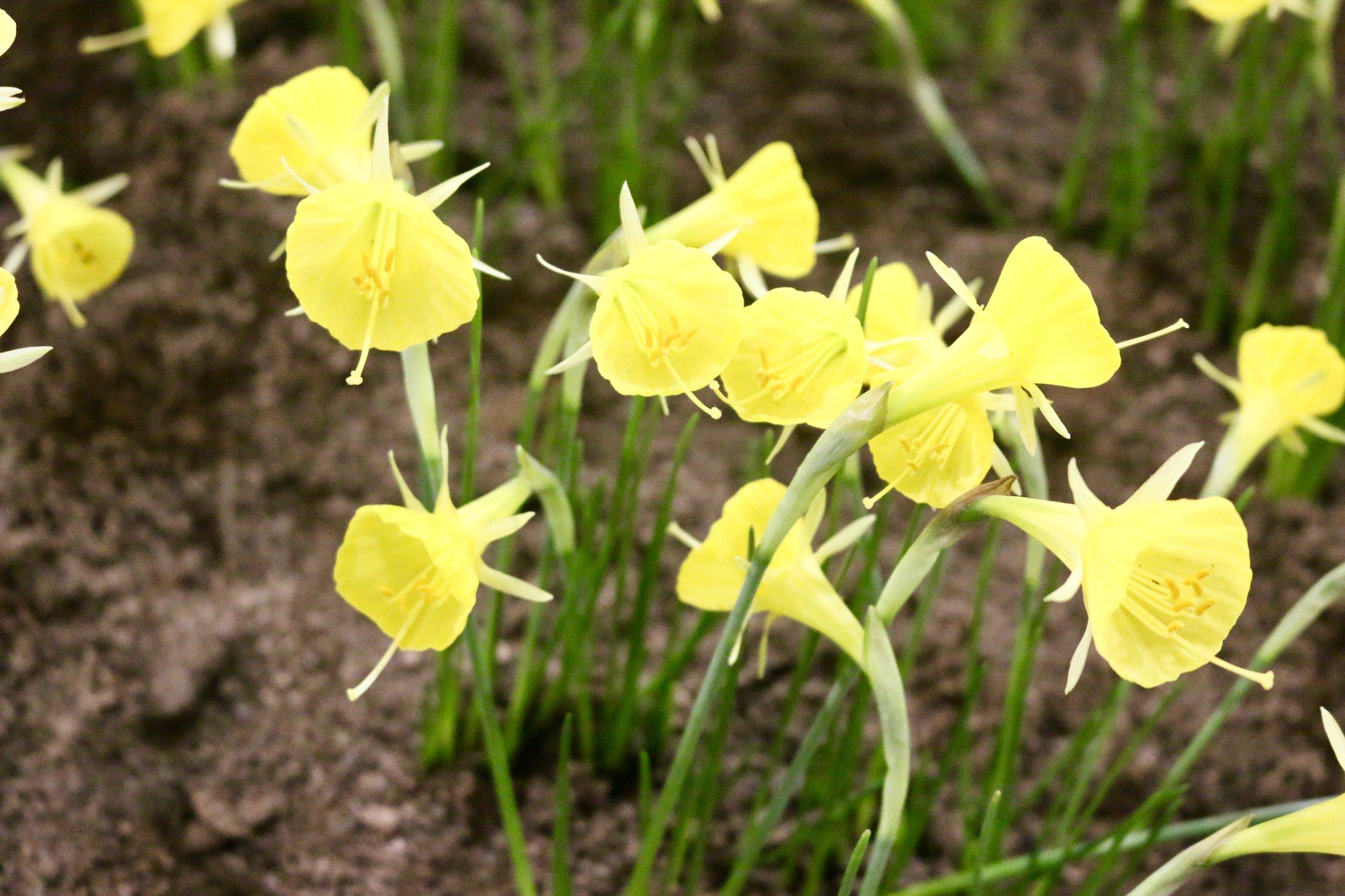 Ghodsee Flower Power 7.jpg