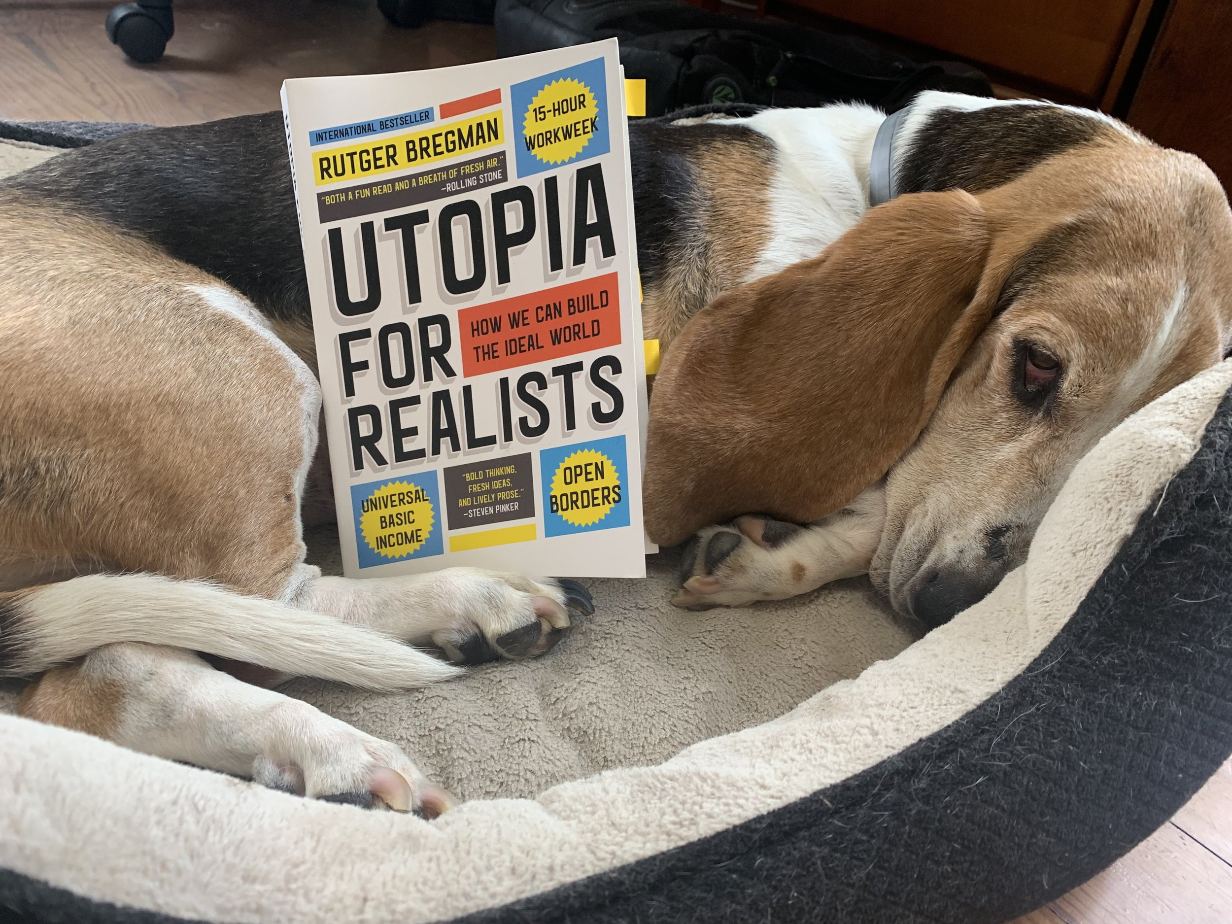 Utopia for Realists.jpeg