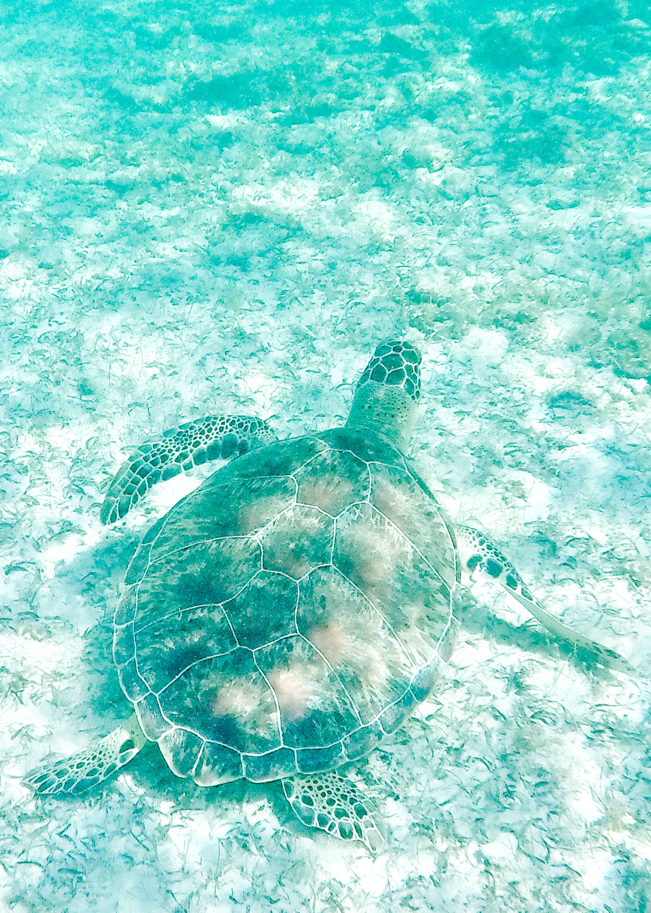 Swimming with turtles at Spott's Beach