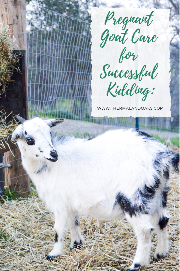 Copy of Copy of Copy of Copy of Copy of Copy of The 6 benefits of raising goats (1).png