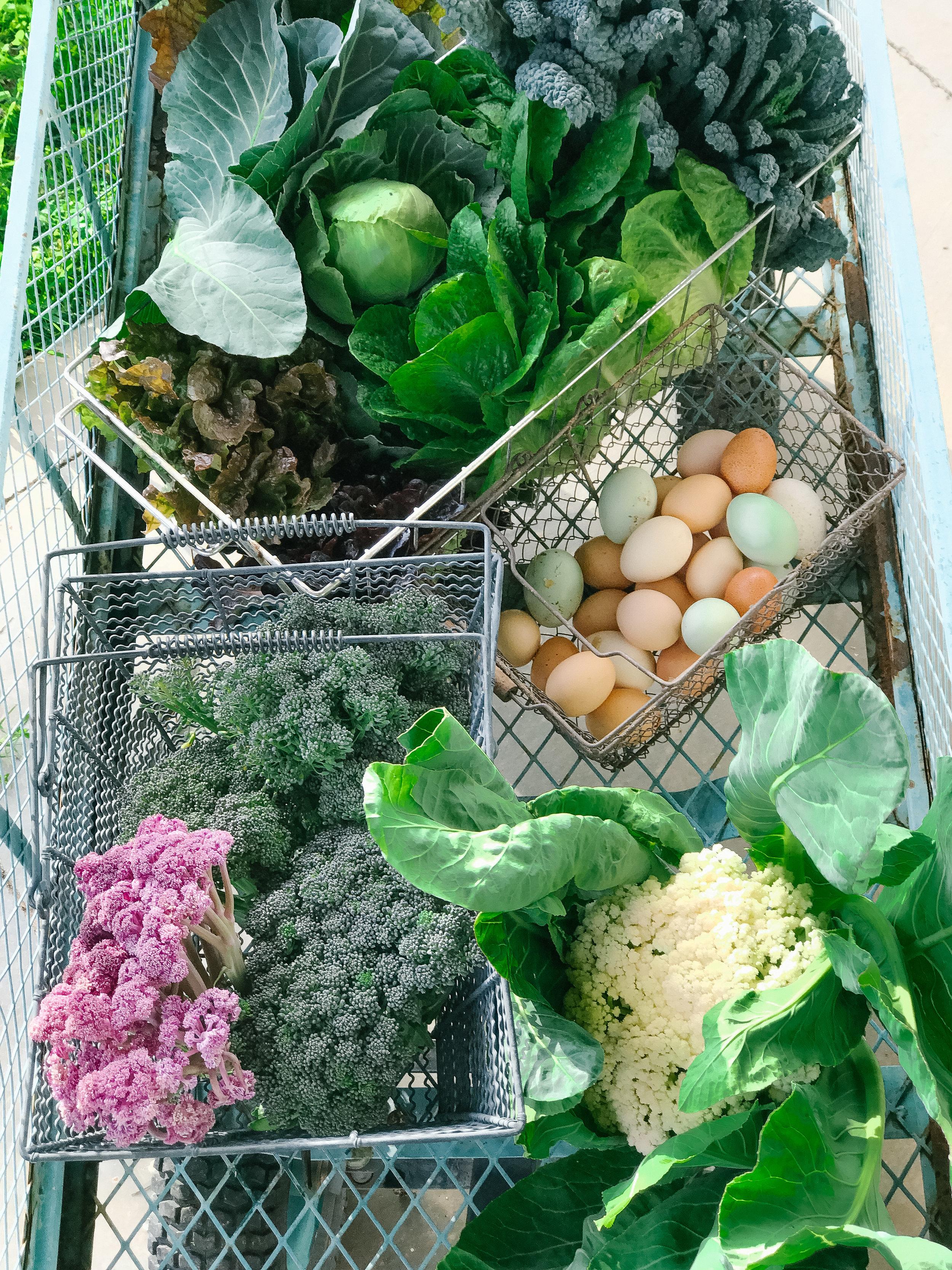 Farm to Fork Soup #farmtofork #nutrition #gardenfresh #farmtotable #farming #healthyfood #farmfresh #nutritionist #lab #labrador #garden #homesteading