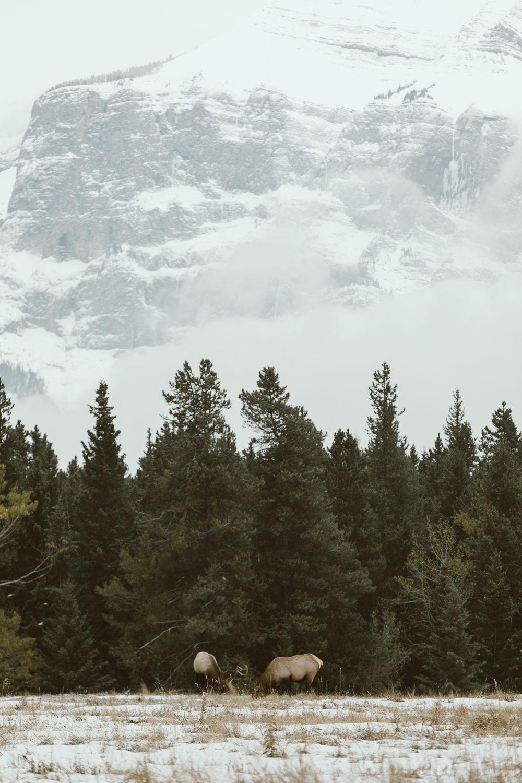 Banff_23.jpg