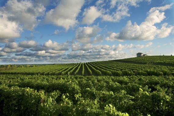 Michigan-Wine-Country-e1427227670780.jpg
