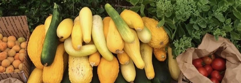 Backyard GardenShare - Community Food Sharing