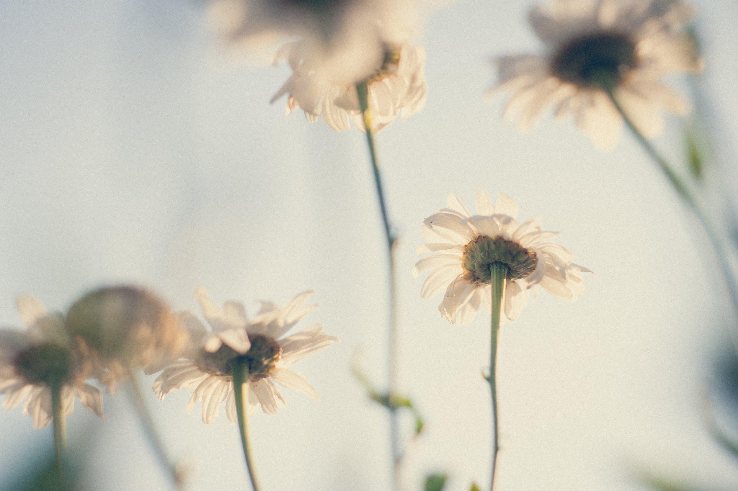 background-bloom-blooming-583850.jpg