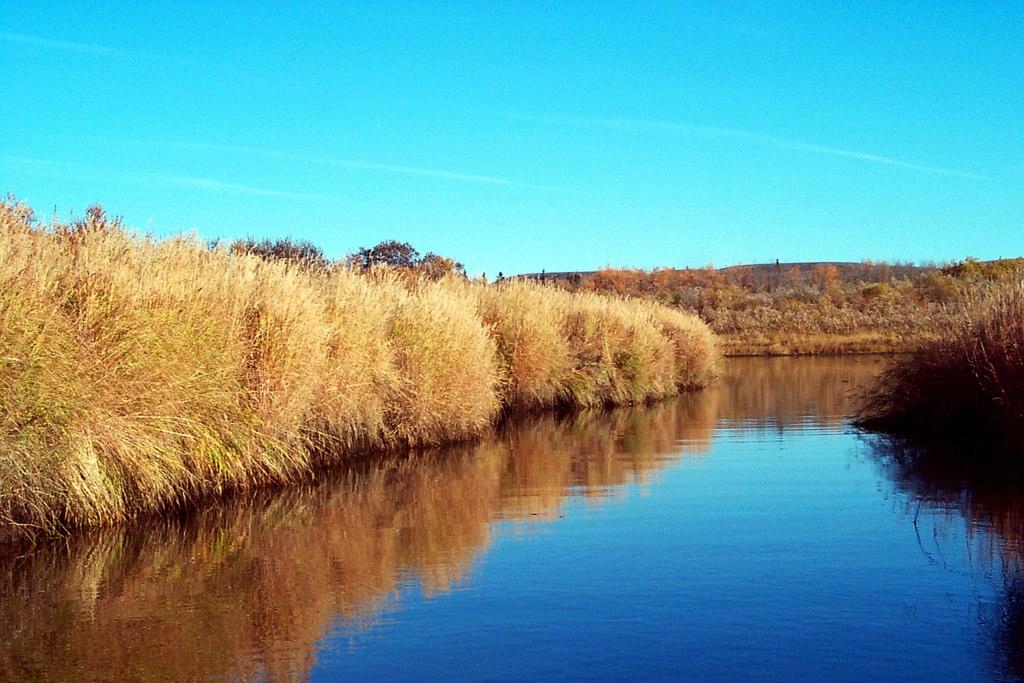 Grass-Along-Creek.jpg