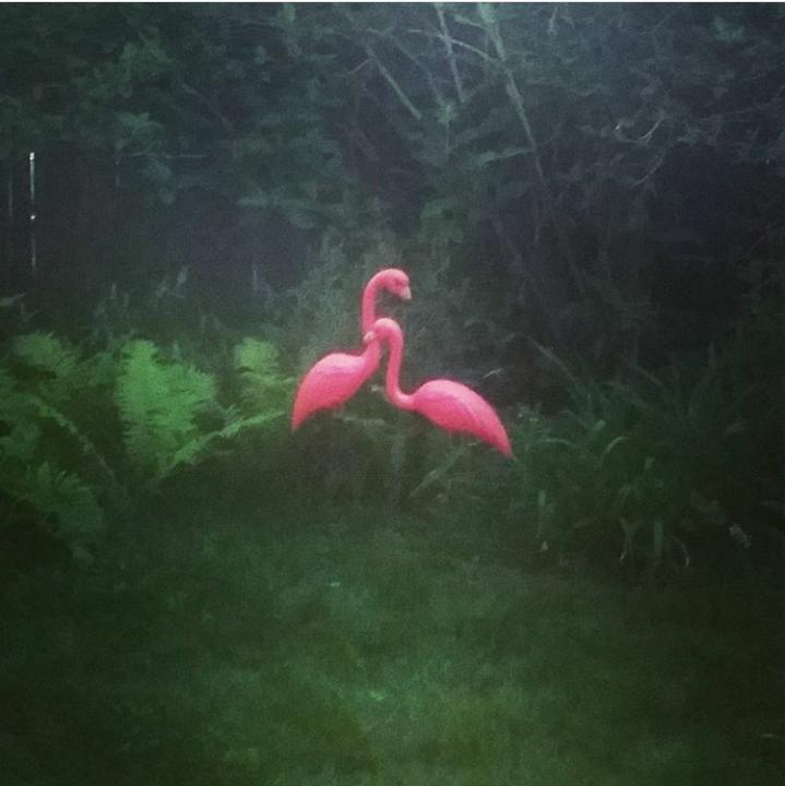 flamingoes.png