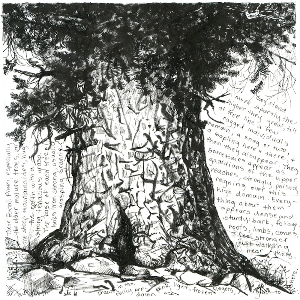 Artist's Books: In Forests