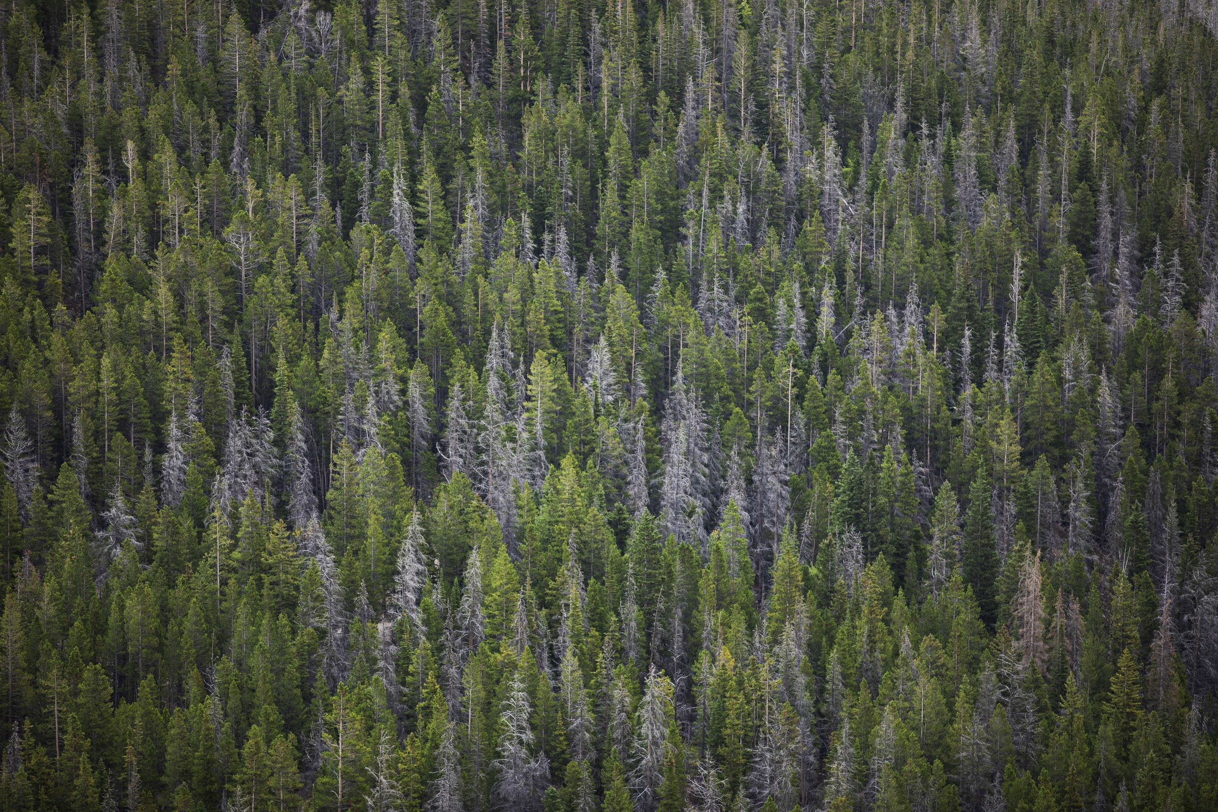Trees - Rocky Mountain National Park, Colorado