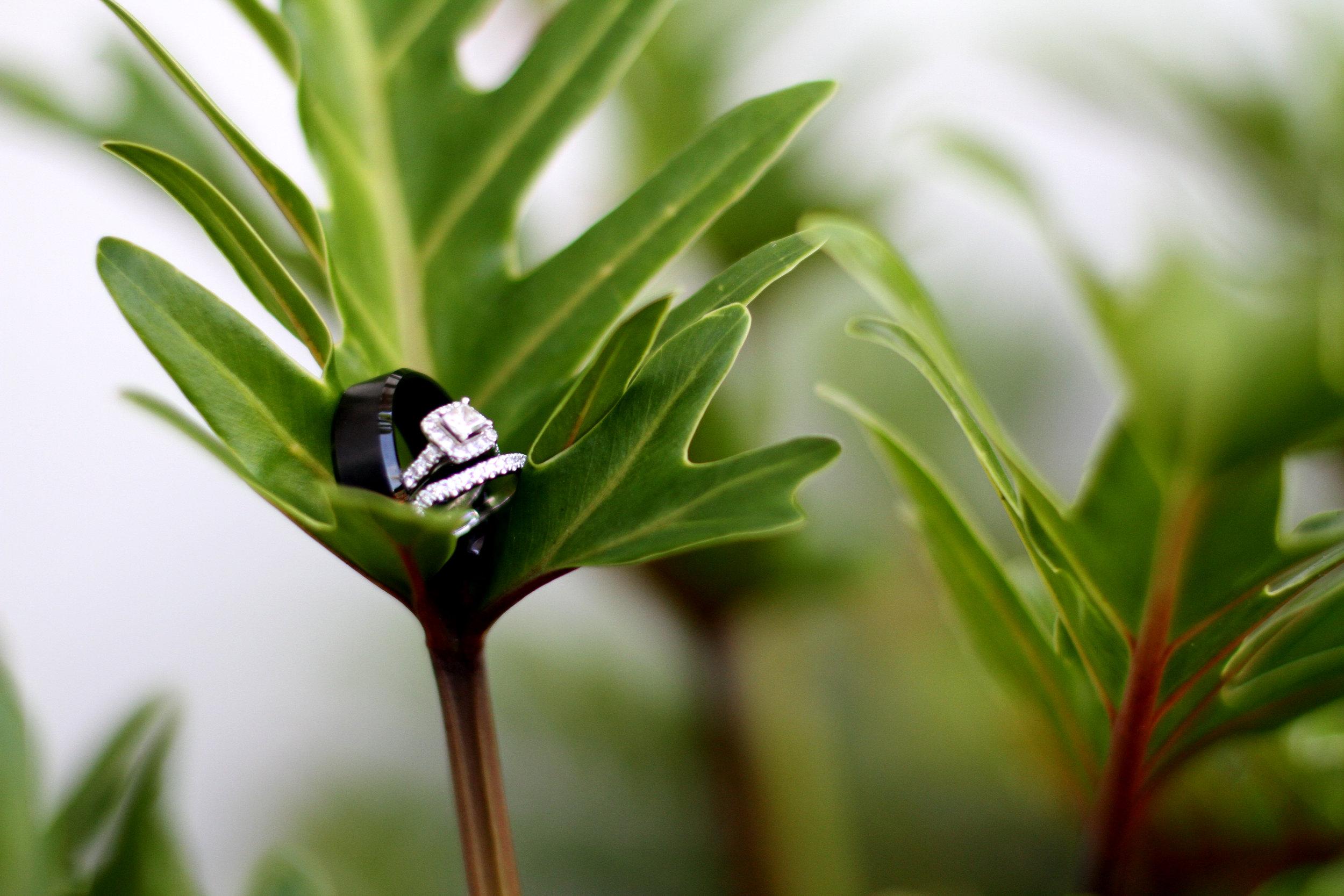 Rings in plants