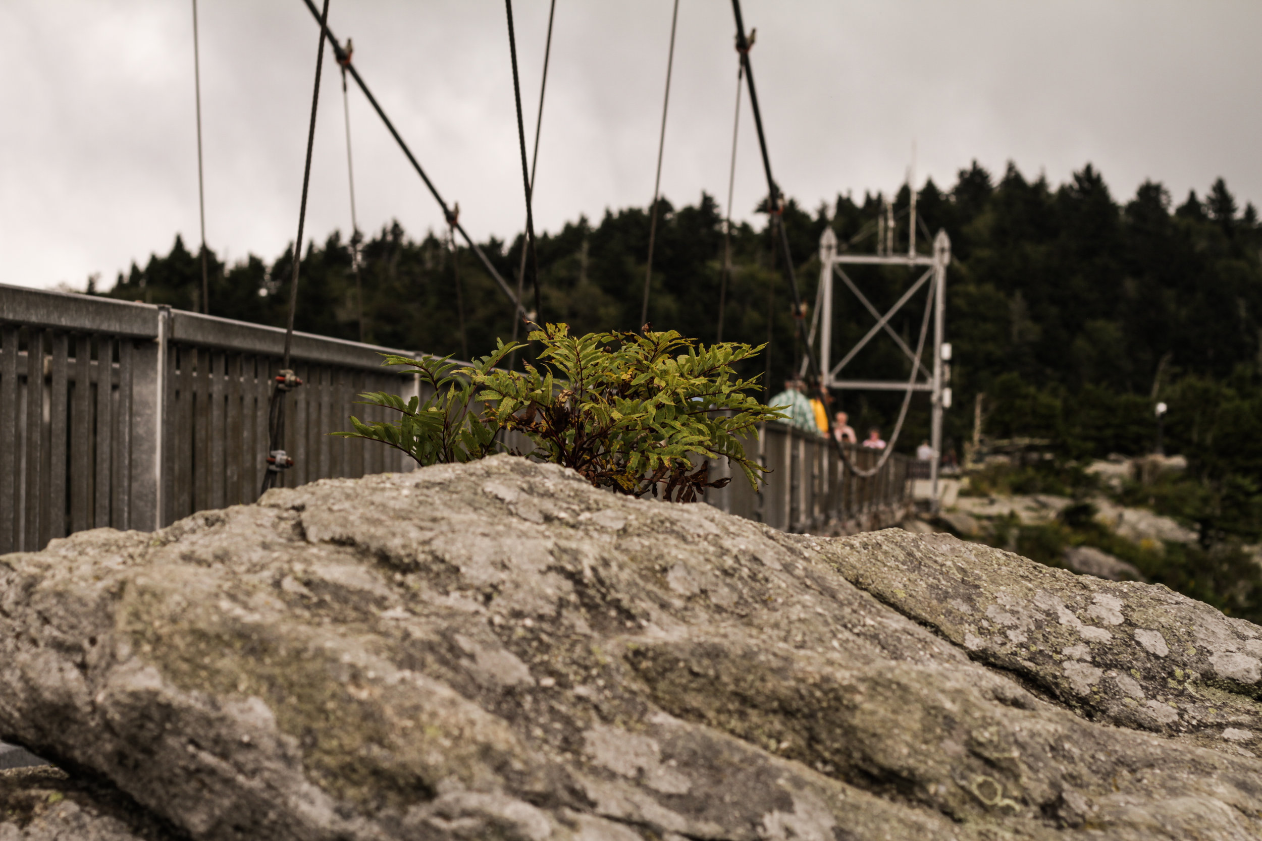 Grandfather Mountain Swinging Bridge From the Side