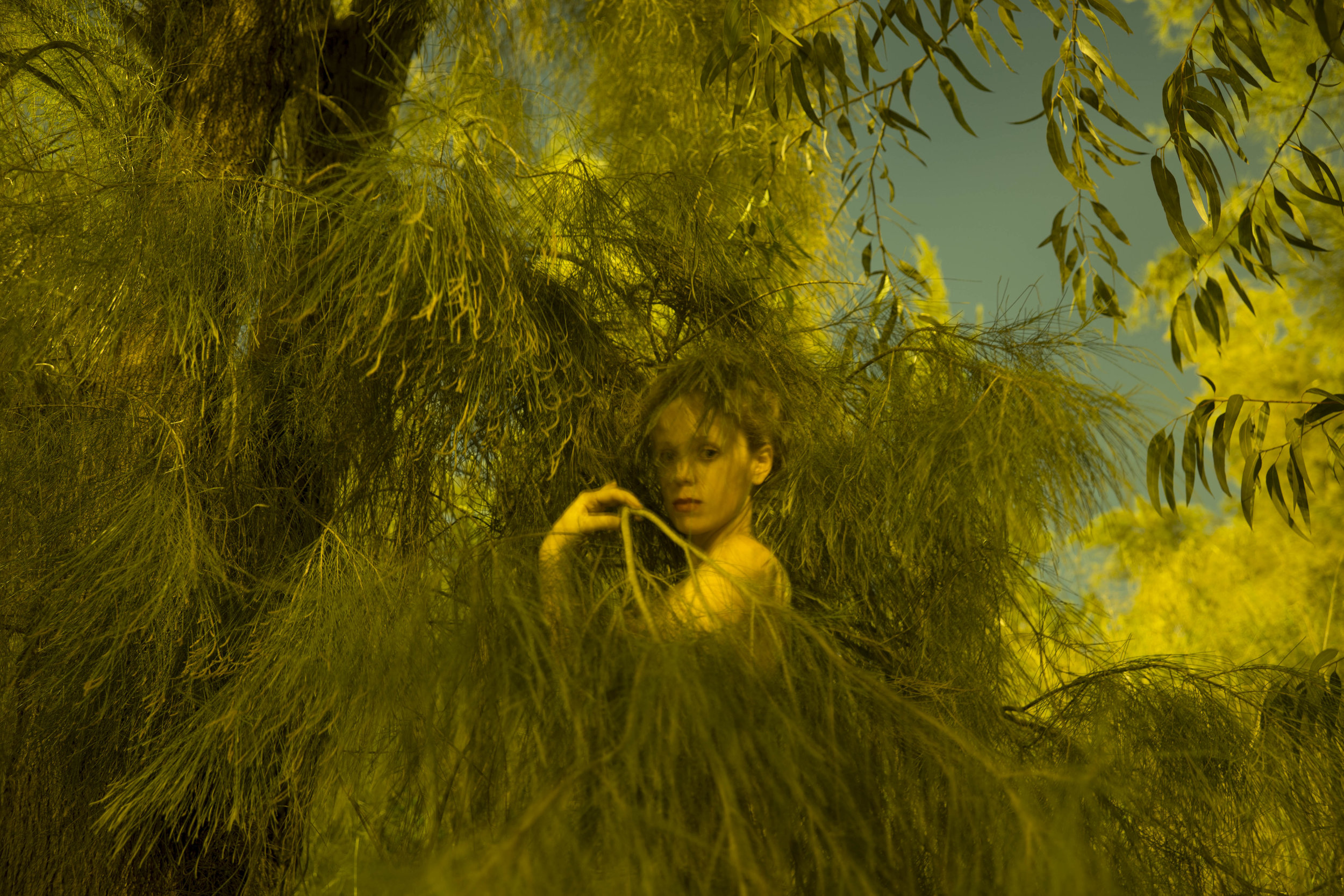 Girl in golden tree, 2015.jpg