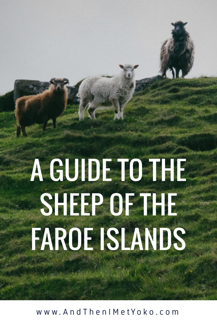 Interesting facts about the sheep off the Faroe Islands