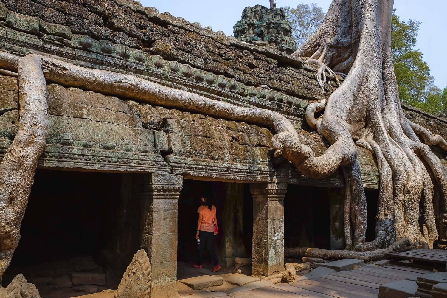 The roots of large trees grow out of Ta Prohm.     #siemreap #taprohm #travelguide #angkorwat #siemreapitinerary #cambodia #travelphotography #landscapephotography #fujifilm #siemreapprivatetour
