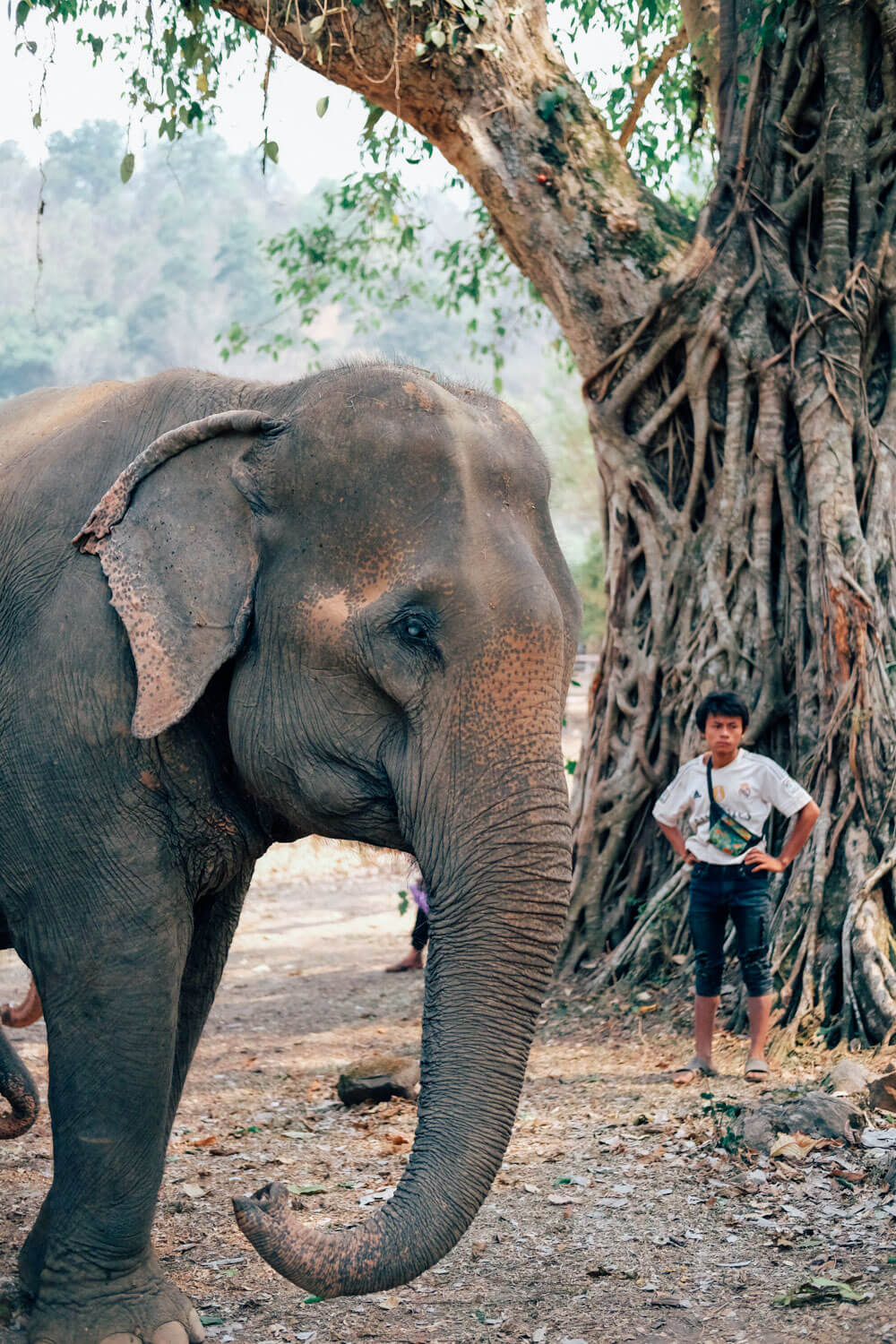 """Elephant Nature Park, Chiang Mai. Travel photography and guide by © Natasha Lequepeys for """"And Then I Met Yoko"""". #thailand #travelguide #travelphotography #animalphotography #travelitinerary #fujifilm"""