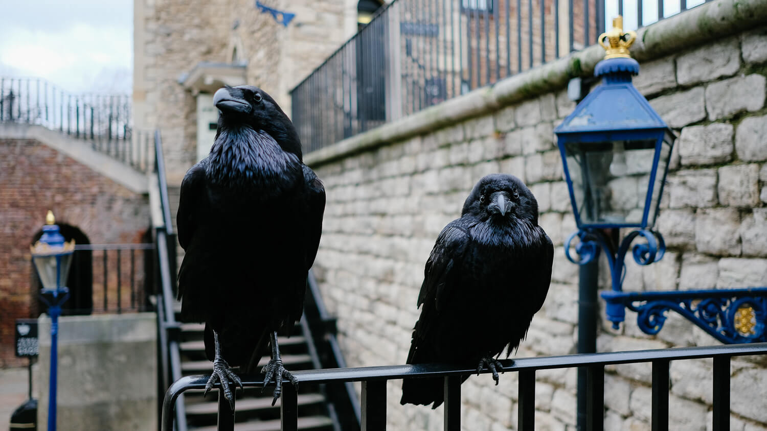 Some ravens in the Tower of London