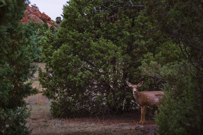 "A curious deer, Garden of the Gods. Travel photography and guide by © Natasha Lequepeys for ""And Then I Met Yoko"". #colorado #usa #coloradosprings #travelguide #coloradoitinerary #fujifilm"