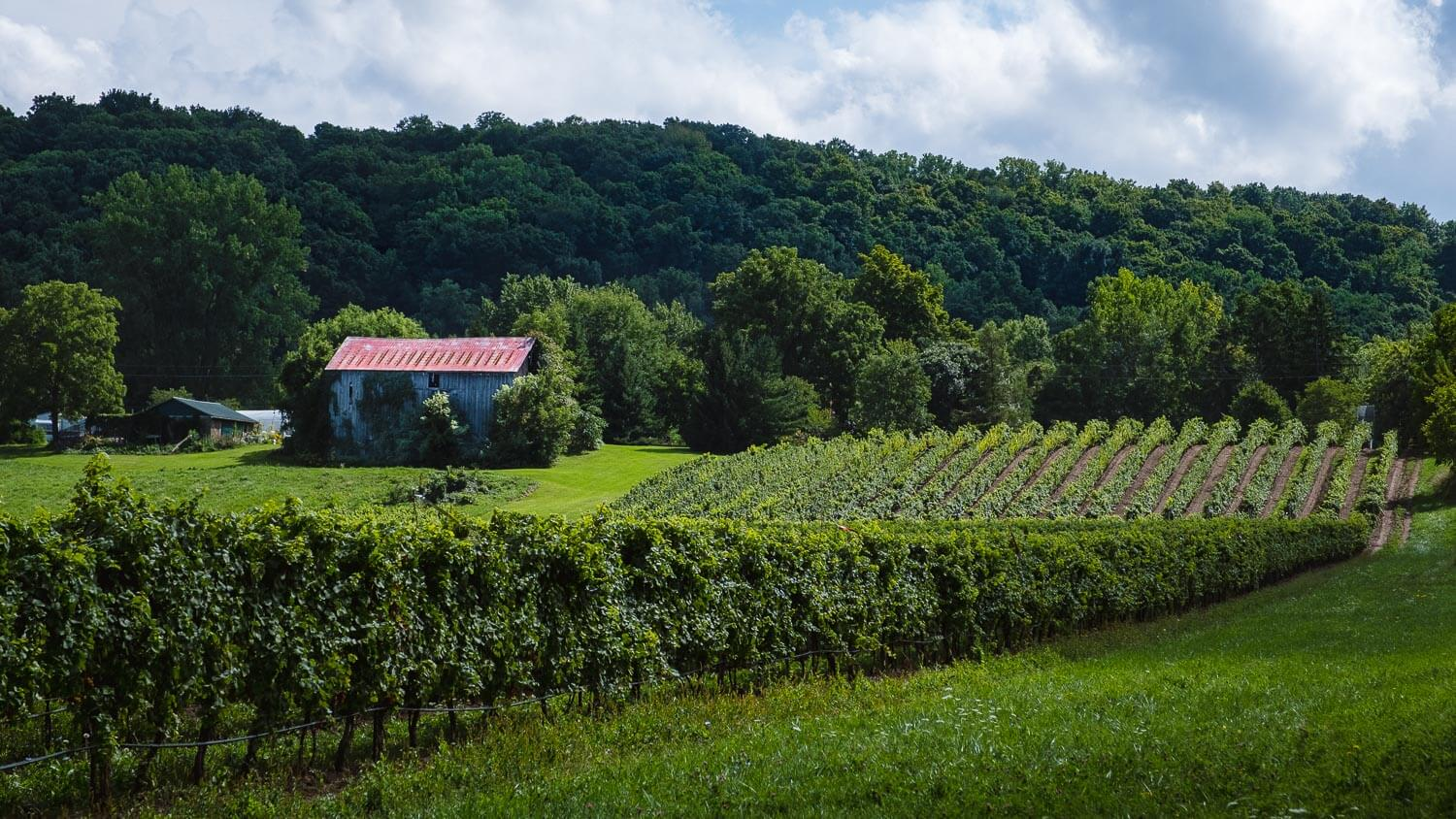 "Vineyard in Niagara-On-The-Lake. Travel photography and guide by © Natasha Lequepeys for ""And Then I Met Yoko"". #ontario #canada #travelblog #niagaraphotography #travelitinerary #fujifilm"