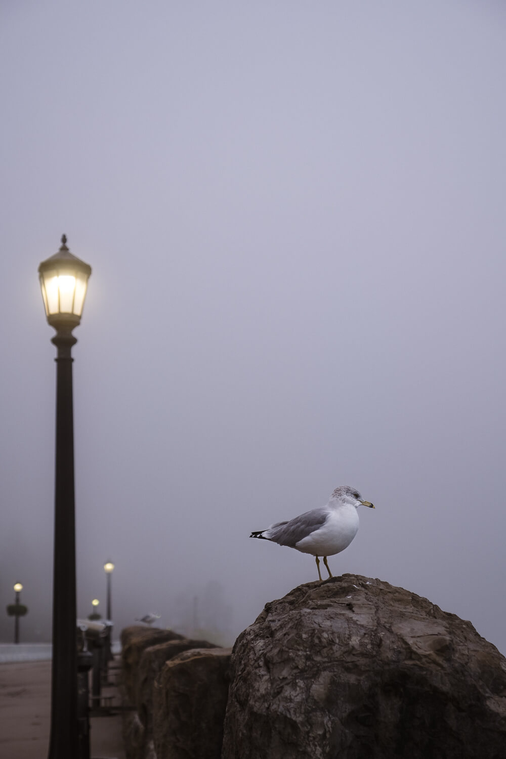 A seagull in the early morning
