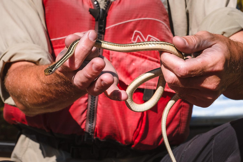 "A water snake - Travel photography and guide by © Natasha Lequepeys for ""And Then I Met Yoko"". #neworleans #nola #photoblog #travelitinerary #fujifilm #kayaking #naturephotography"