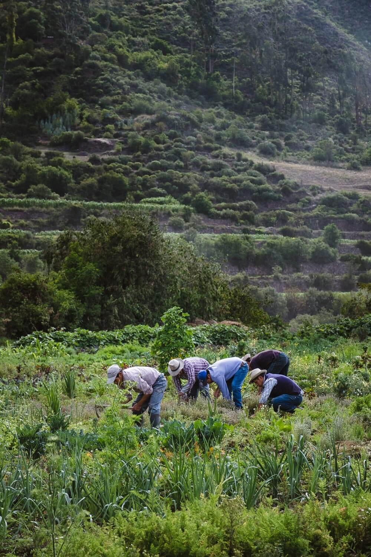 "A farm in The Sacred Valley, Peru. Travel photography and guide by © Natasha Lequepeys for ""And Then I Met Yoko"". #travelguide #photoblog #fujifilm #machupicchu #ValleSagrado #travel"