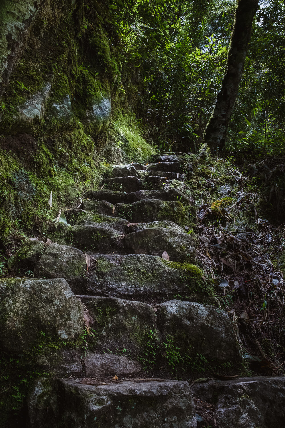 "Steps on the short Inca Trail. Travel photography and guide by © Natasha Lequepeys for ""And Then I Met Yoko"". #machupicchu #shortincatrail #2dayincatrail #incatrail #aguascalientes #sacredvalley #peru #travelguide #photoblog #travelblog #travelphotography #landscapephotography #travelitinerary #machupicchuitinerary #fujifilm #southamerica #visitperu #dayhike #ancientruins #hiking"