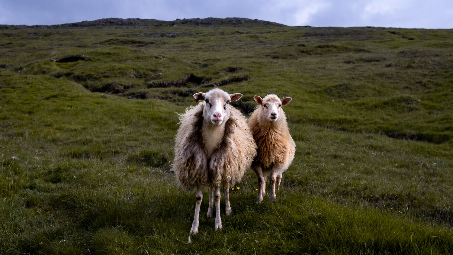 The Faroe Islands. © Natasha Lequepeys for And Then I Met Yoko. Travel Photography and Visual travel Guides.