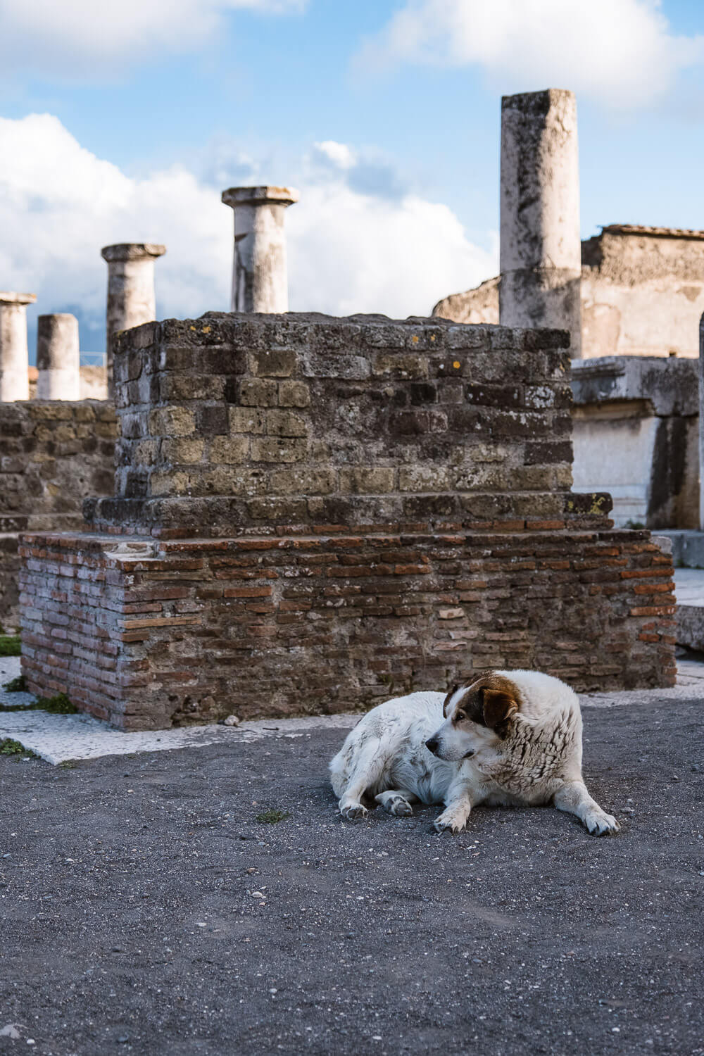 """Stray dog laying in the forum of Pompeii, Italy. Travel photography and guide by © Natasha Lequepeys for """"And Then I Met Yoko"""". #pompeii #italy #fujifilm #travelphotography"""