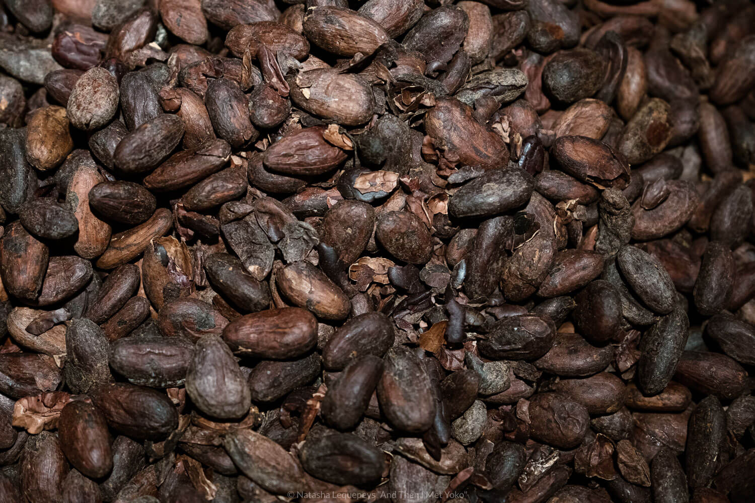 "Cocoa beans at the Maison Cailler, Gruyères, Switzerland. Travel photography and guide by © Natasha Lequepeys for ""And Then I Met Yoko"". #gruyere #switzerland #travelguide #travelphotography"