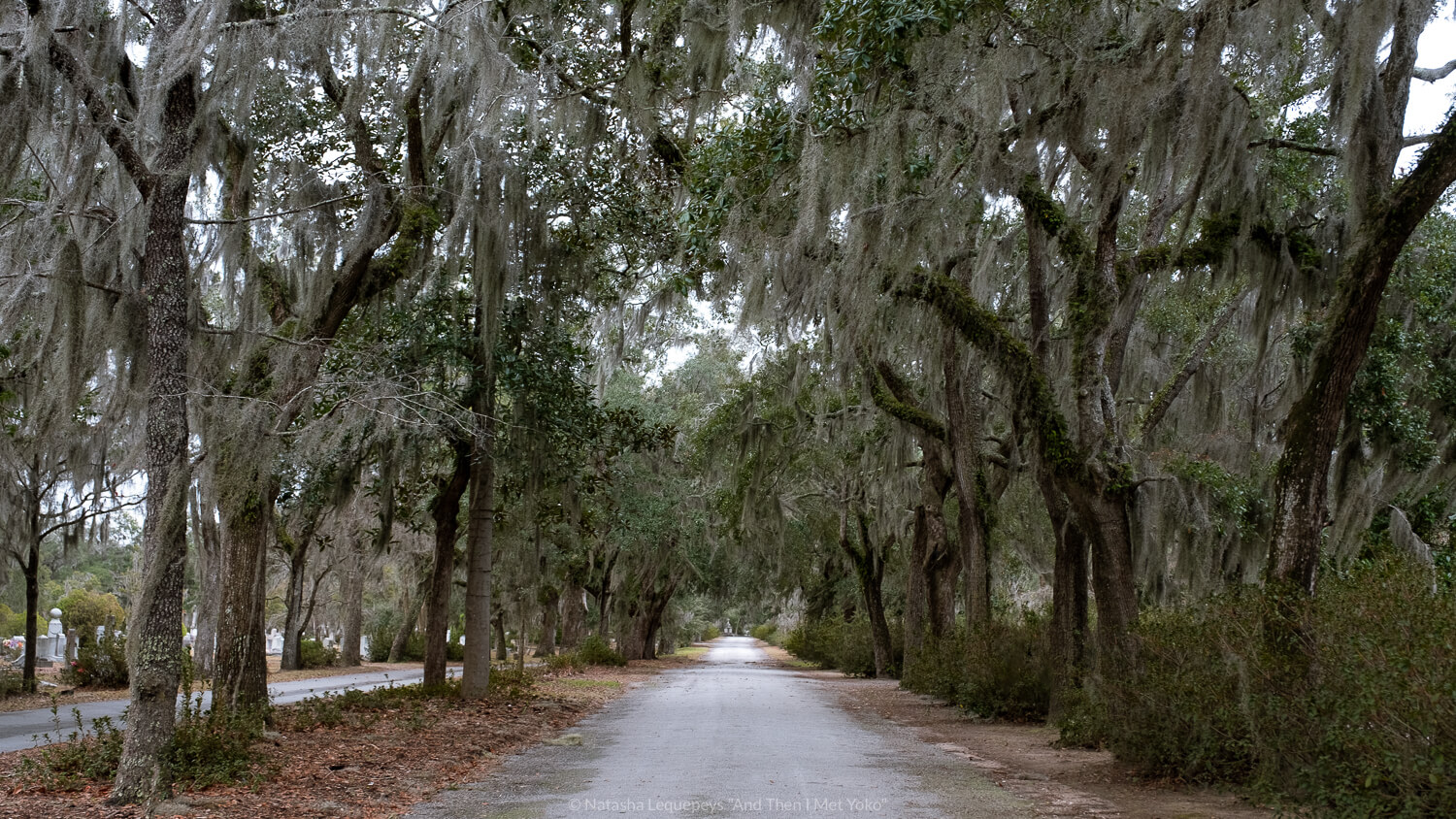 """Road with live oaks at Bonaventure Cemetery in Savannah, Georgia. Travel photography and guide by © Natasha Lequepeys for """"And Then I Met Yoko"""". #bonaventurecemetery #savannah #travelguide #travelblog #travelphotography #fujifilm"""