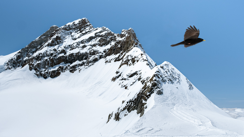 "Mountain Peaks at Jungfraujoch, Switzerland. Travel photography and guide by © Natasha Lequepeys for ""And Then I Met Yoko"". #wengen #switzerland #jungfrau #travelphotography #fujifilm"