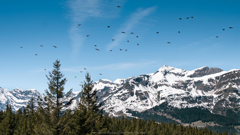 "Hike to Kleine Scheidegg, Switzerland. Travel photography and guide by © Natasha Lequepeys for ""And Then I Met Yoko"". #wengen #switzerland #jungfrau #travelphotography #fujifilm"