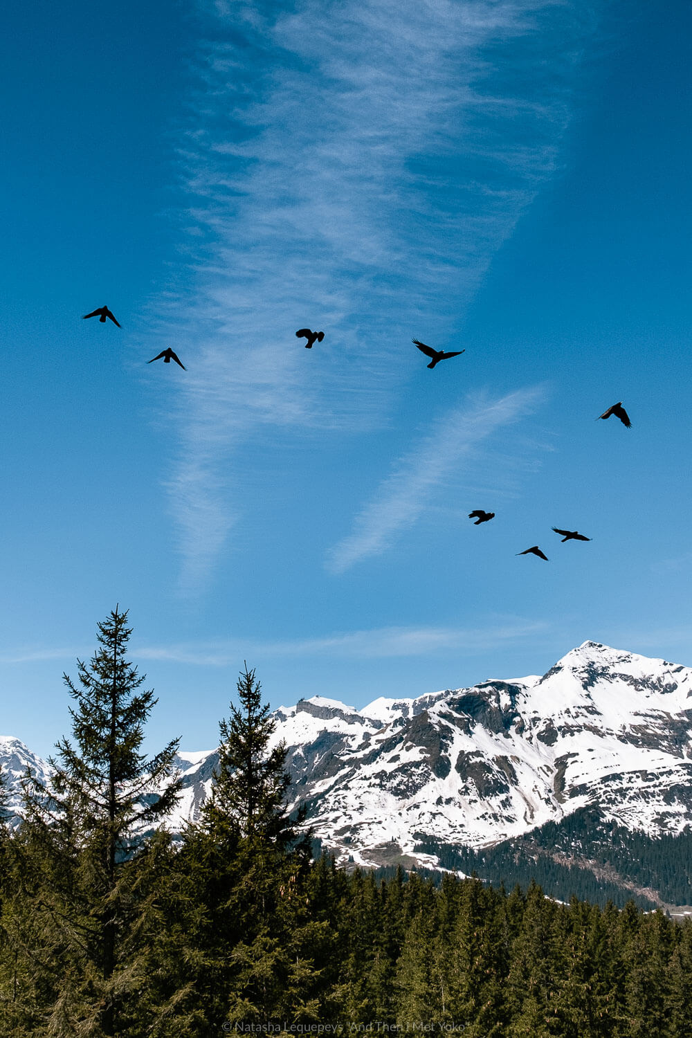 "Birds flying above mountains. Travel photography and guide by © Natasha Lequepeys for ""And Then I Met Yoko"". #wengen #jungfrau #travelphotography #switzerland"