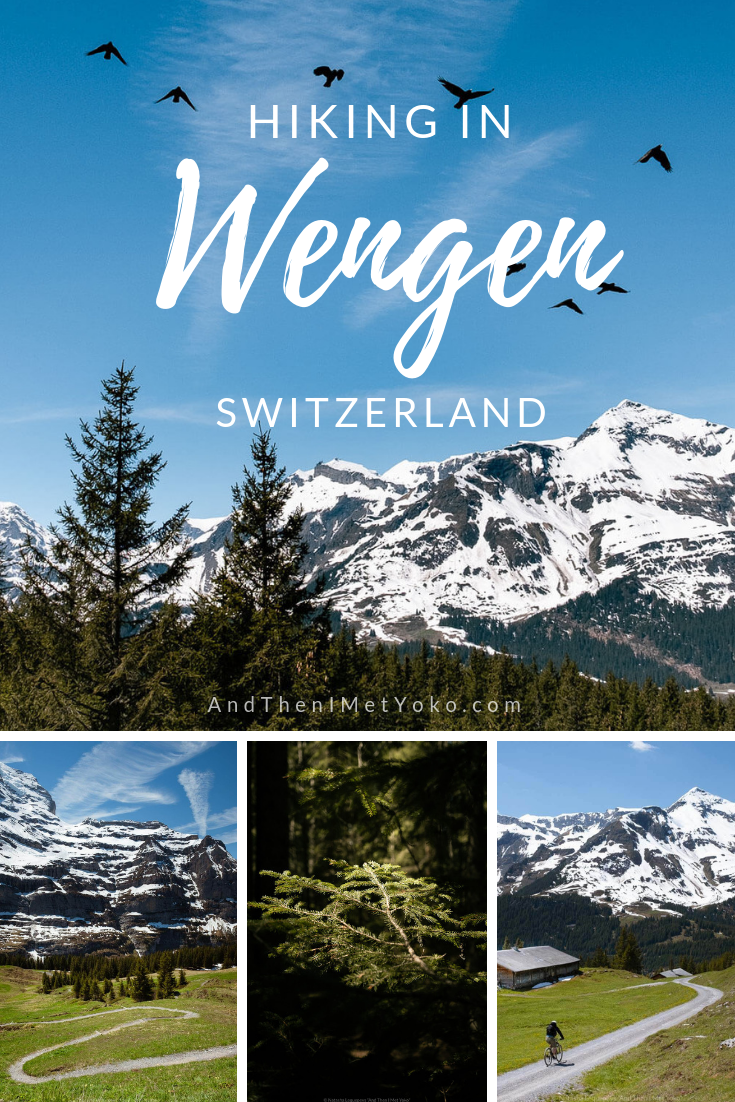 "A photographic travel guide to hiking from Wengen to Kleine Scheidegg. Travel photography and guide by © Natasha Lequepeys for ""And Then I Met Yoko"". #wengen #jungfrau #travelphotography #switzerland"