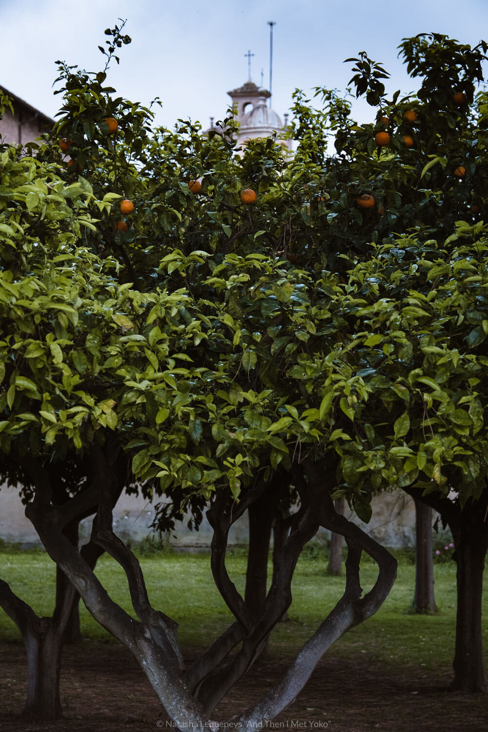 """Orange trees in the Orange Garden in Rome, Italy. Travel photography and guide by © Natasha Lequepeys for """"And Then I Met Yoko"""". #rome #italy #travelblog #travelphotography"""