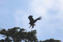 eaglelanding.jpg