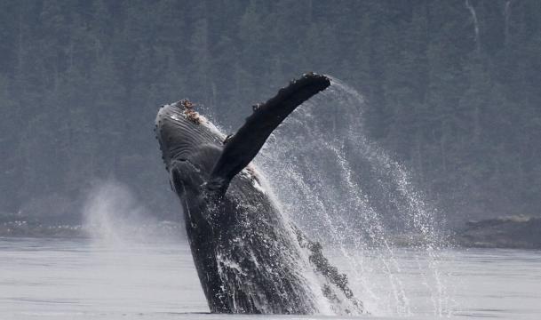 whales - seasmoke.jpeg