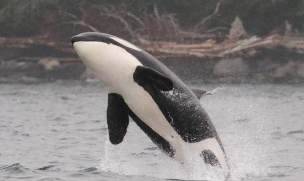 whales 3 - seasmoke.jpeg