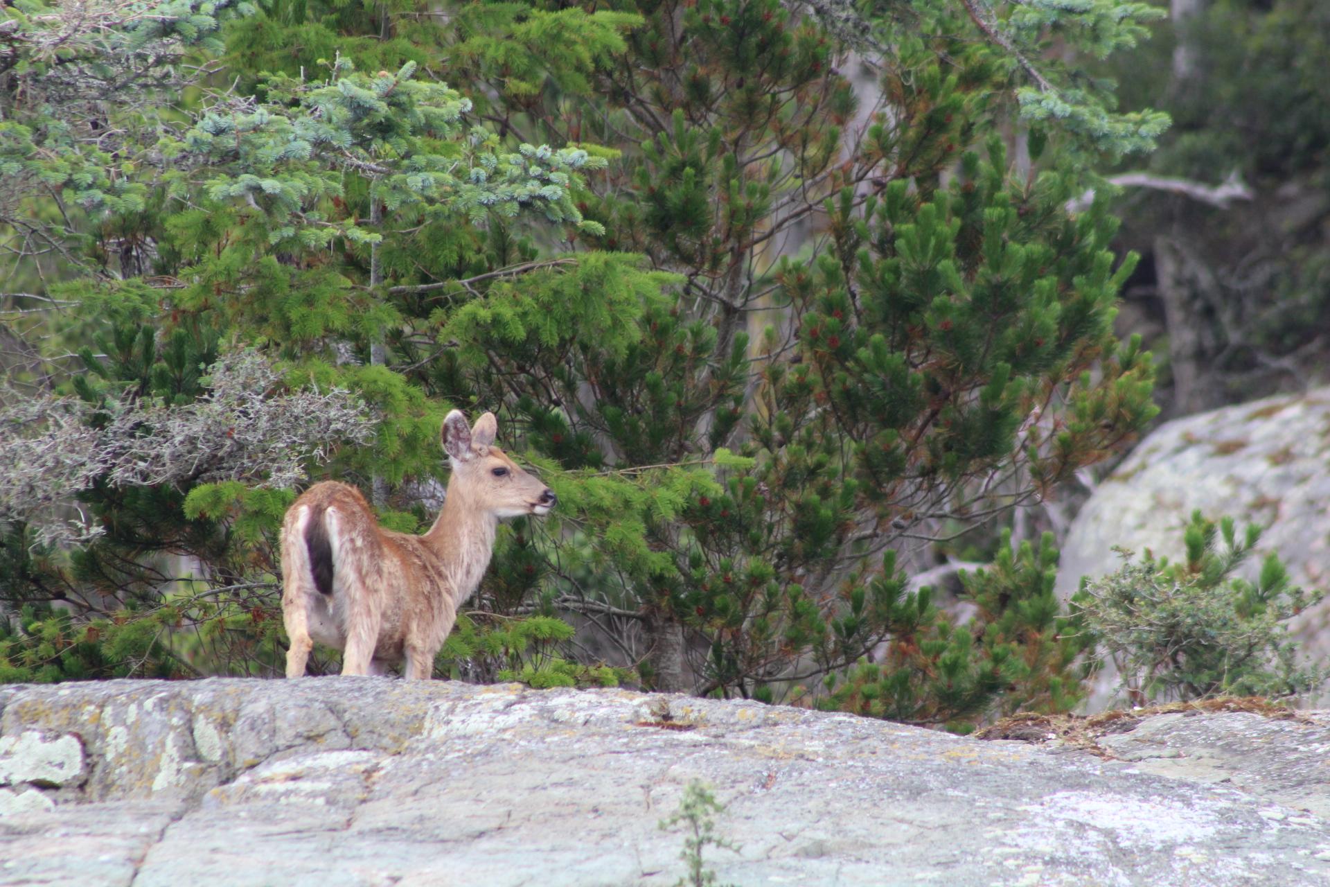 Deer two.JPG