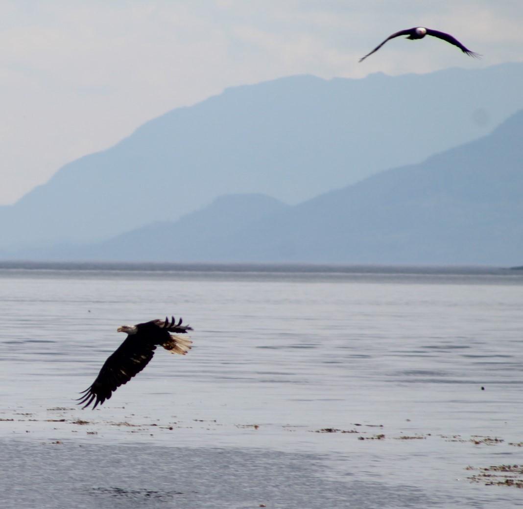 eagles 2.JPG