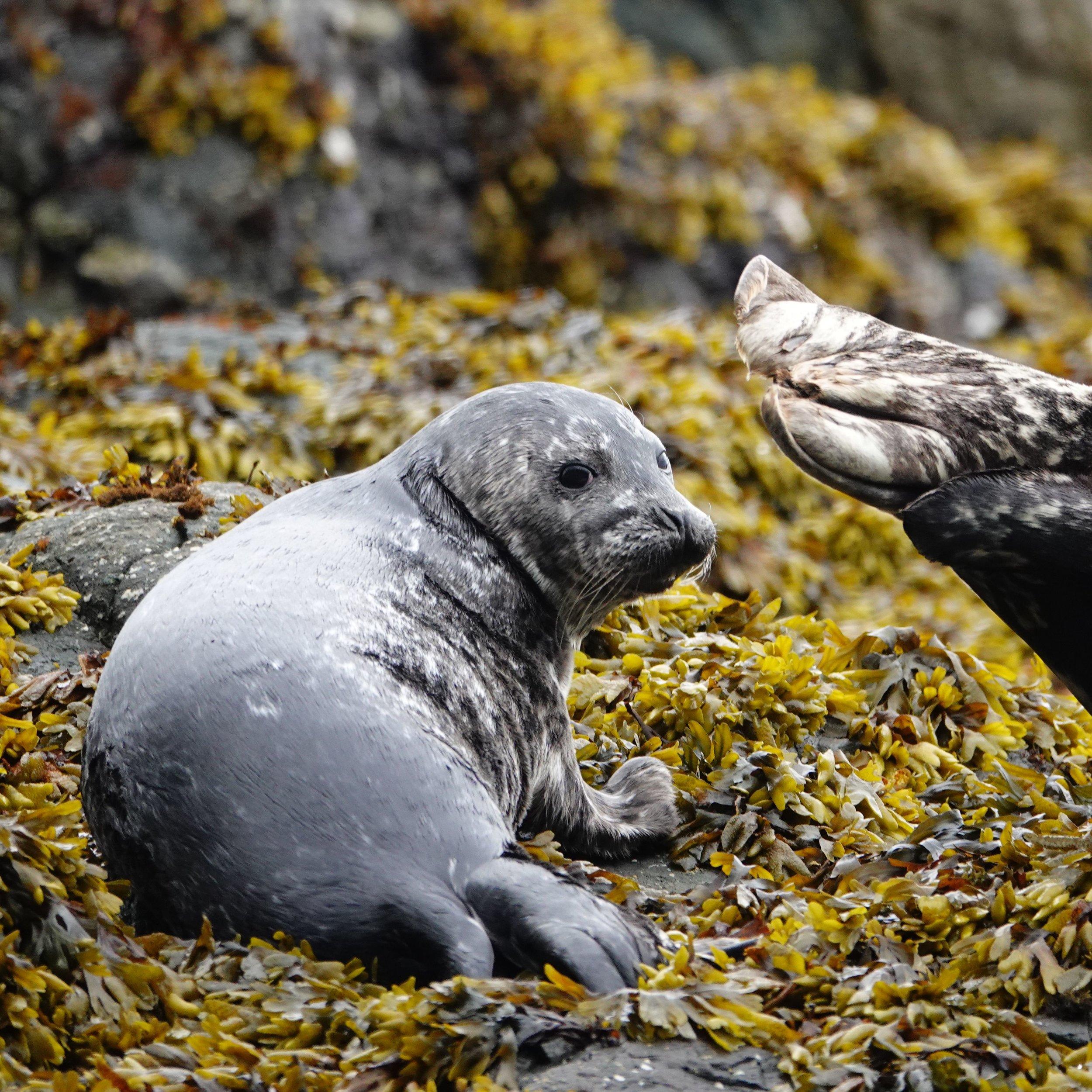 DSC04961cr baby seal.JPG