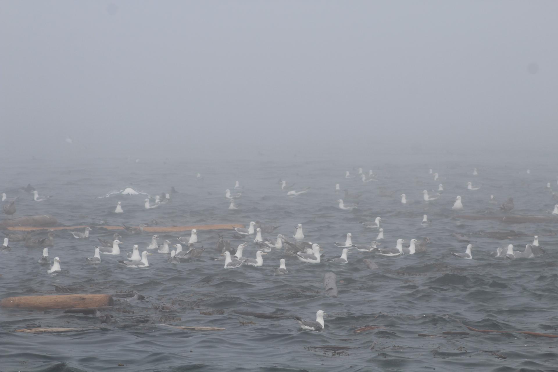 Fog and birds.JPG