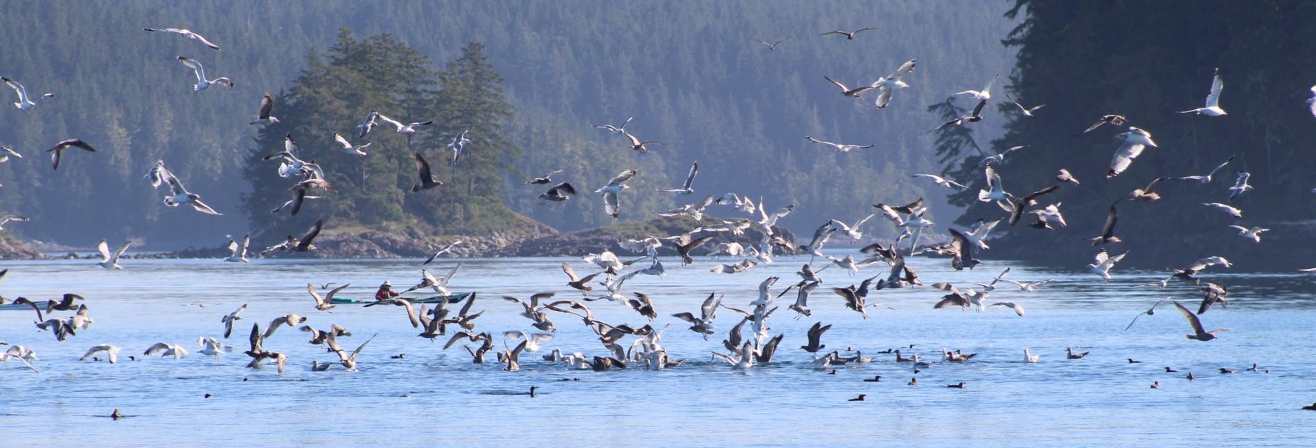 Birds feeding.JPG