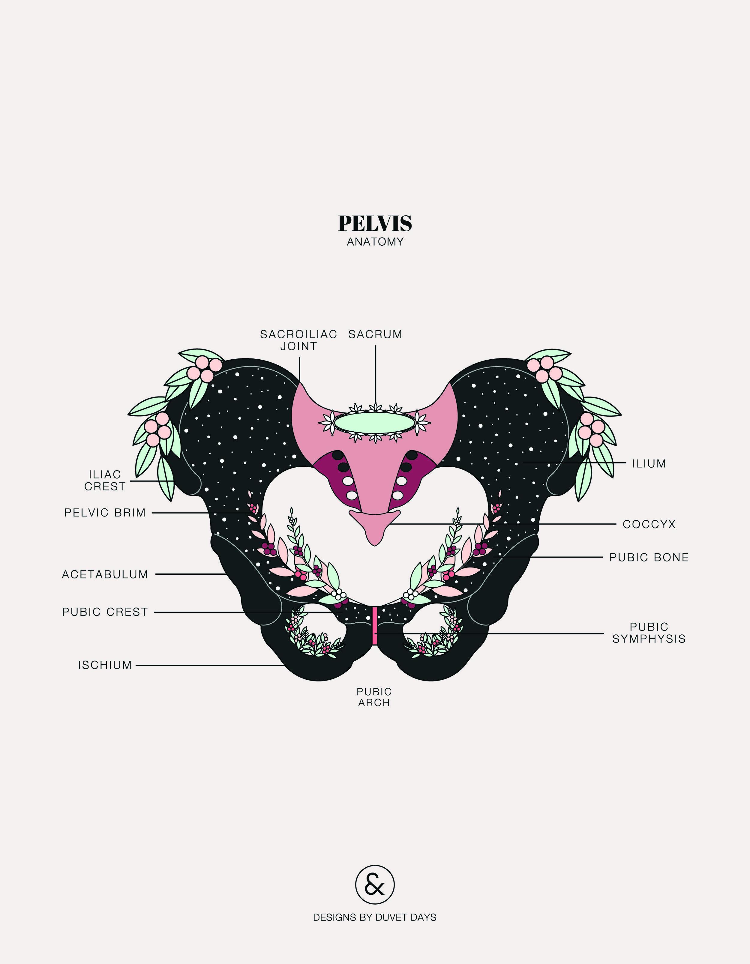 Duvet-Days_Anatomy-Illustrations_8.5x11_Clitoris-Anatomy.jpg