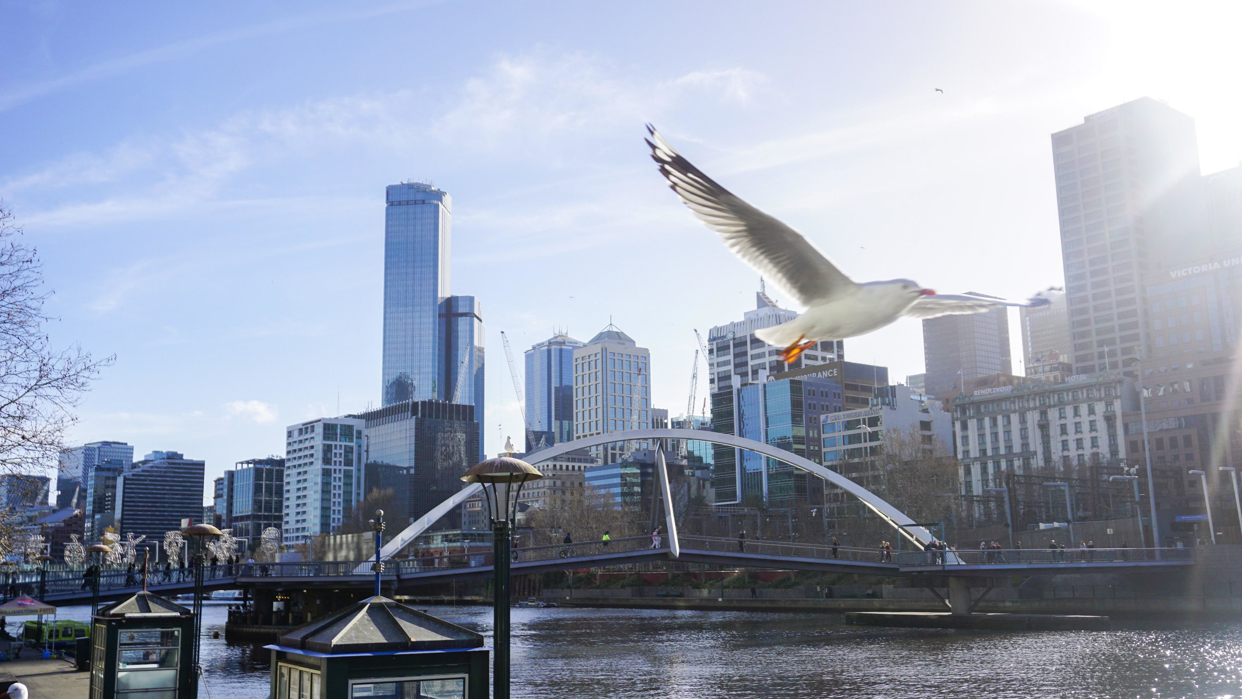 Seagull in Melbourne, by  Franco Torres Productions