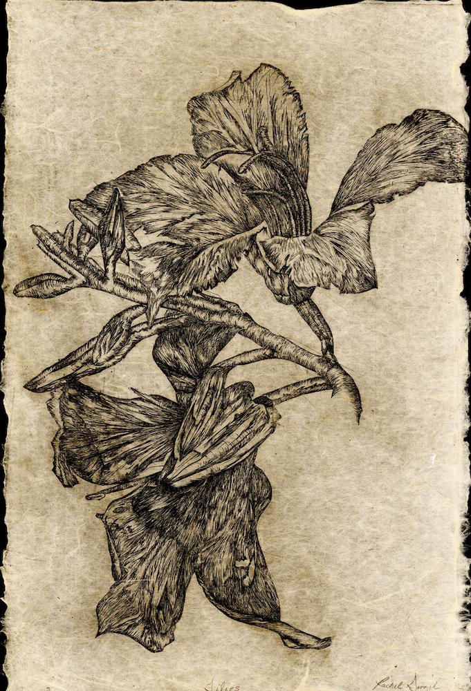 Lilies , Rachel Singel